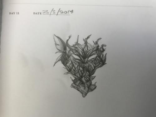 Quick Doodle: Ent