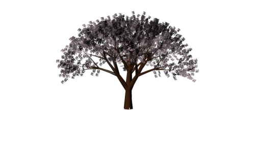 Cherry Tree Texture